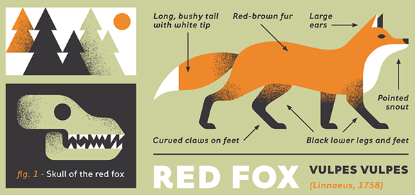 The Prevention and Repelling of Foxes - Get Rid Of Foxes